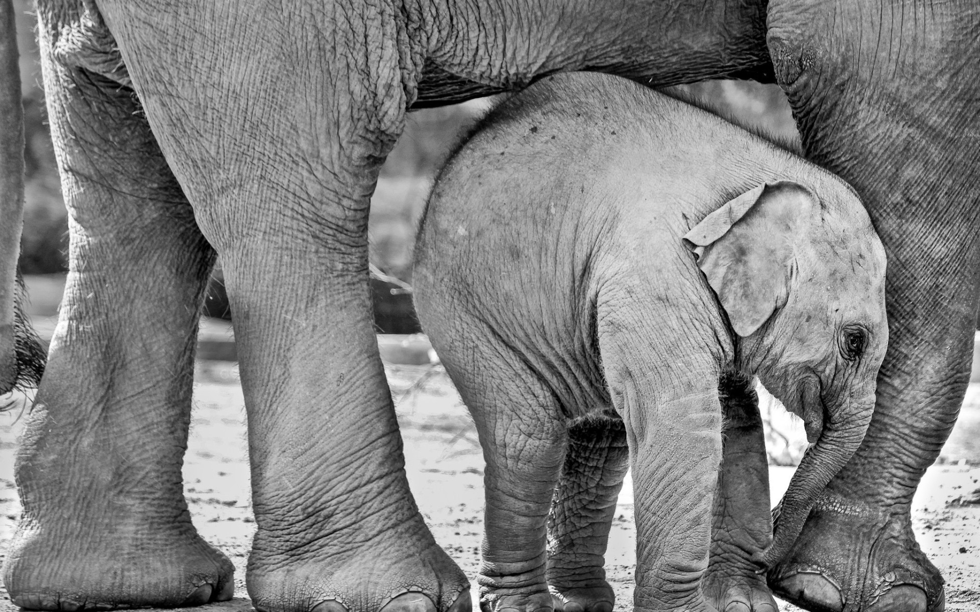 Africa Baby Elephants Click To View