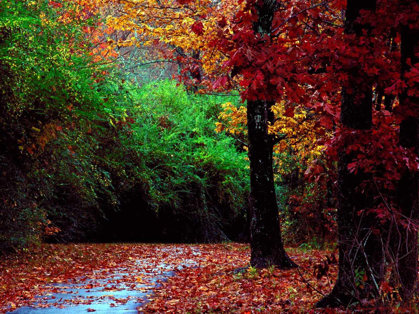 Autumn Forest and Landscape Color | 1600 x 1200 | Download | Close