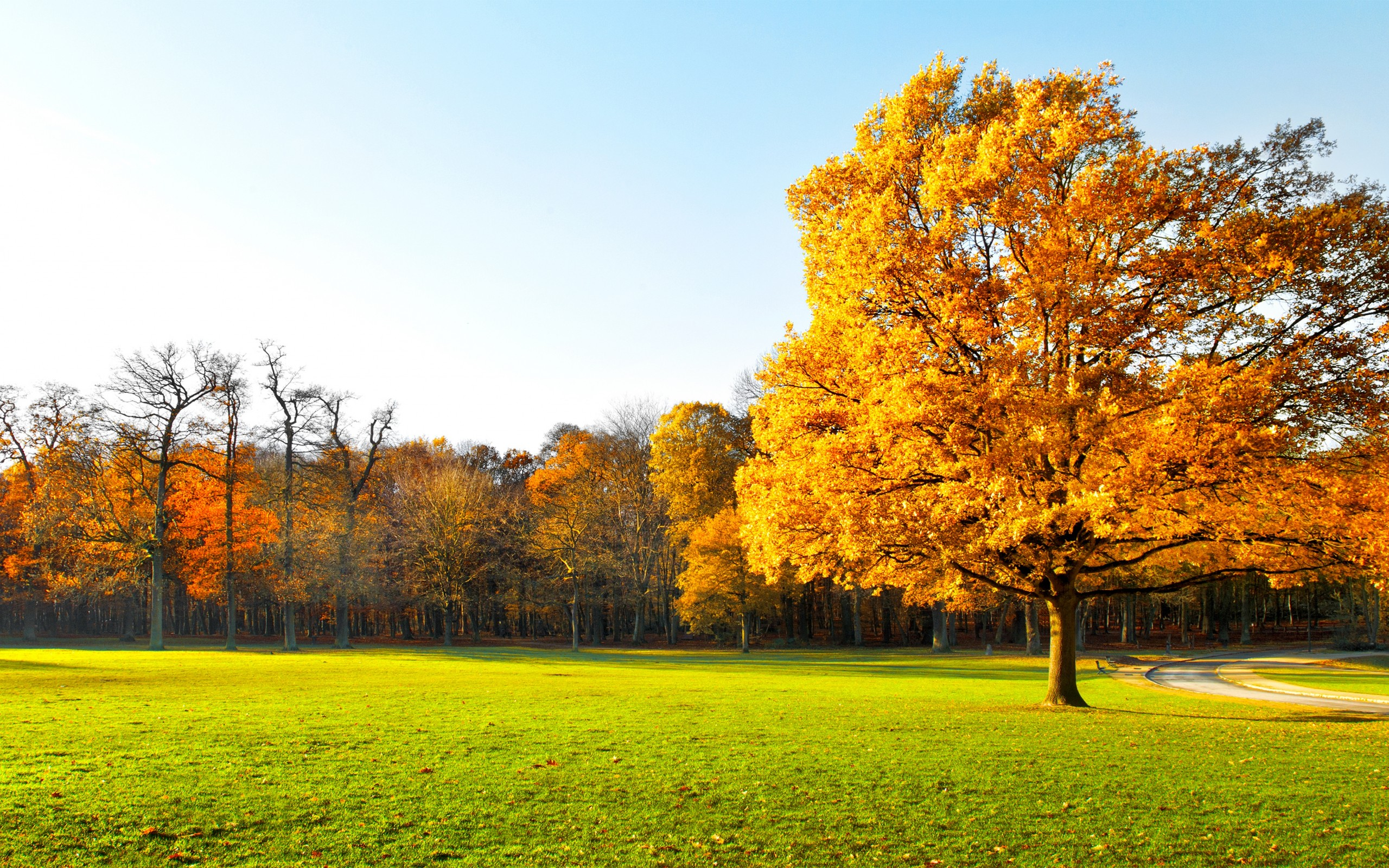 Autumn Tree Garden Landscape Wallpapers - 2560x1600 - 1530131