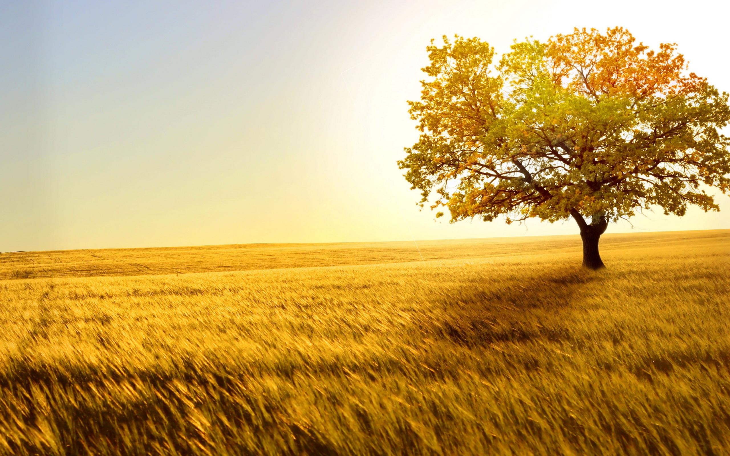 beautiful nature wallpapers - 2560x1600 - 1413081