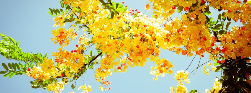 Beautiful yellow flowers wallpapers 851x315 174423 - Nature cover pages for facebook ...