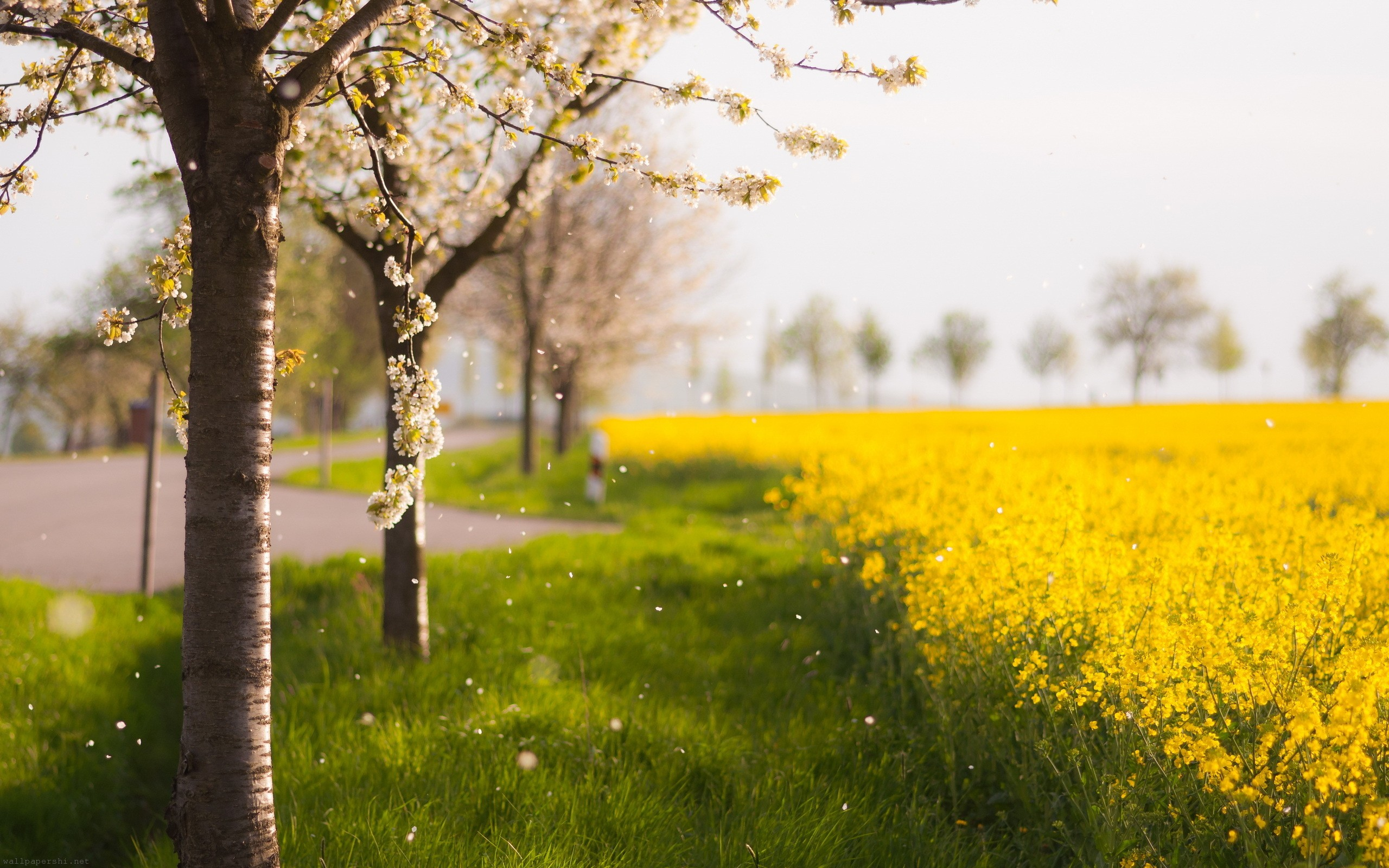 Beautiful Yellow Flowers And Trees Wallpapers