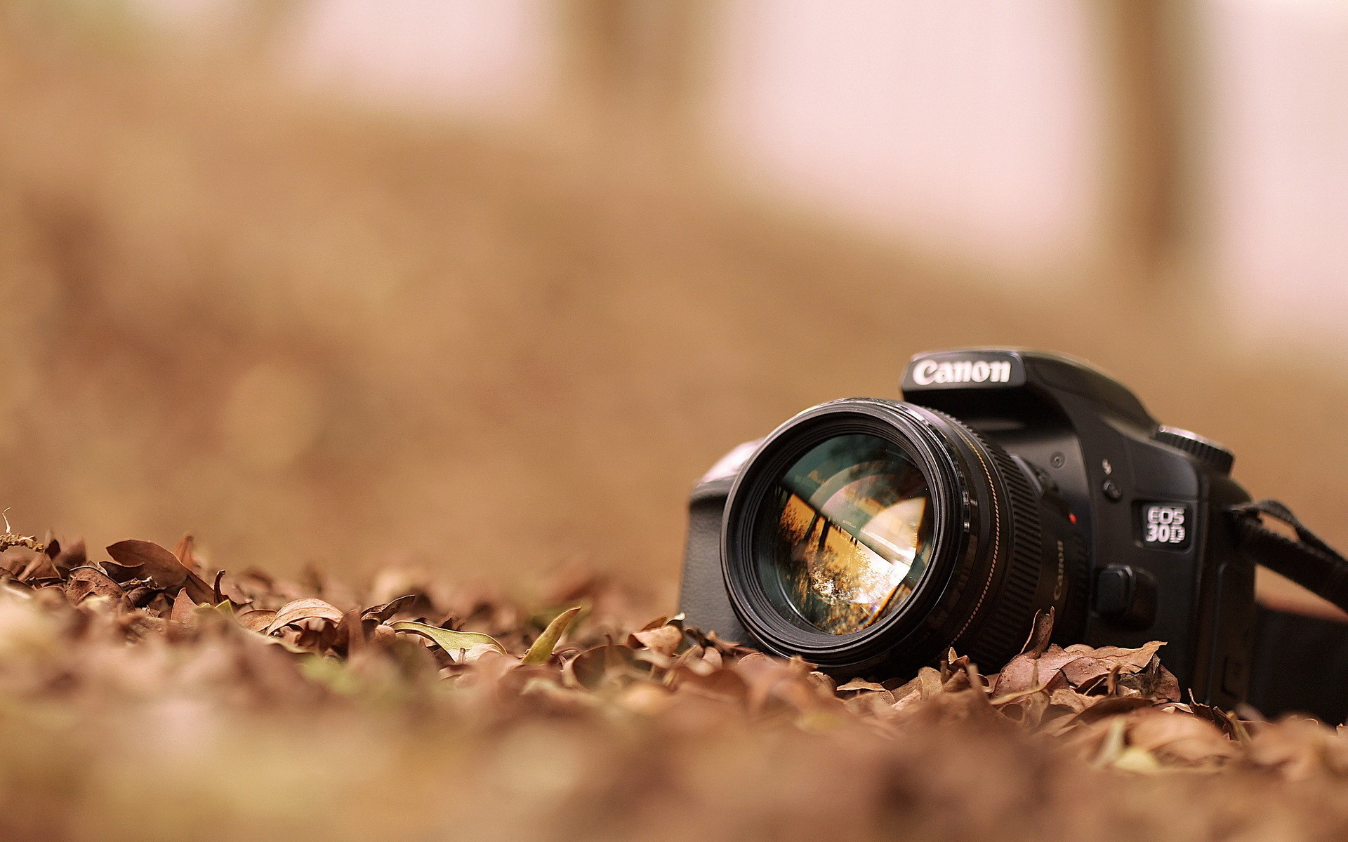 Camera Canon With Leaves