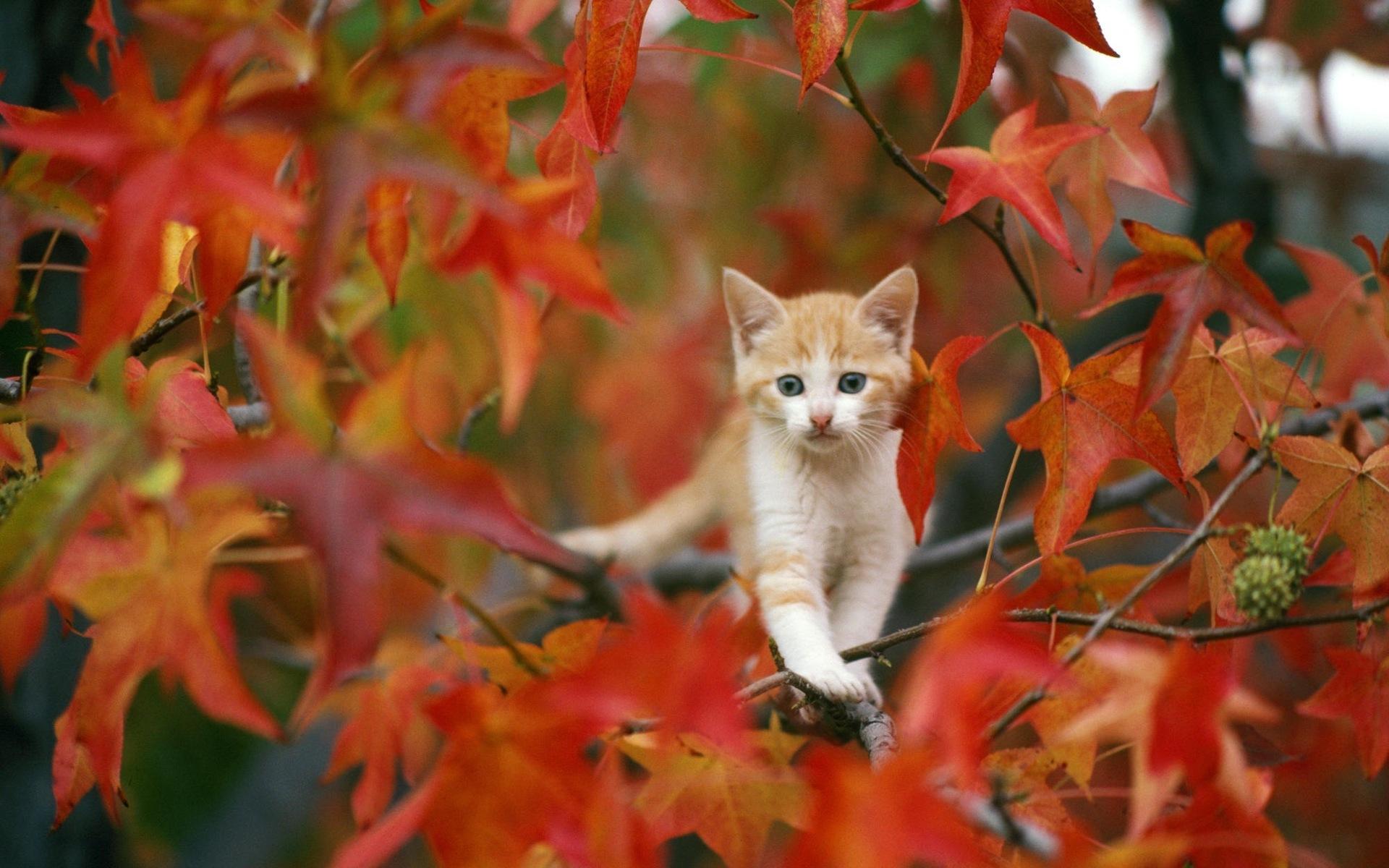 Cat in autumn 1920 x 1200 download close