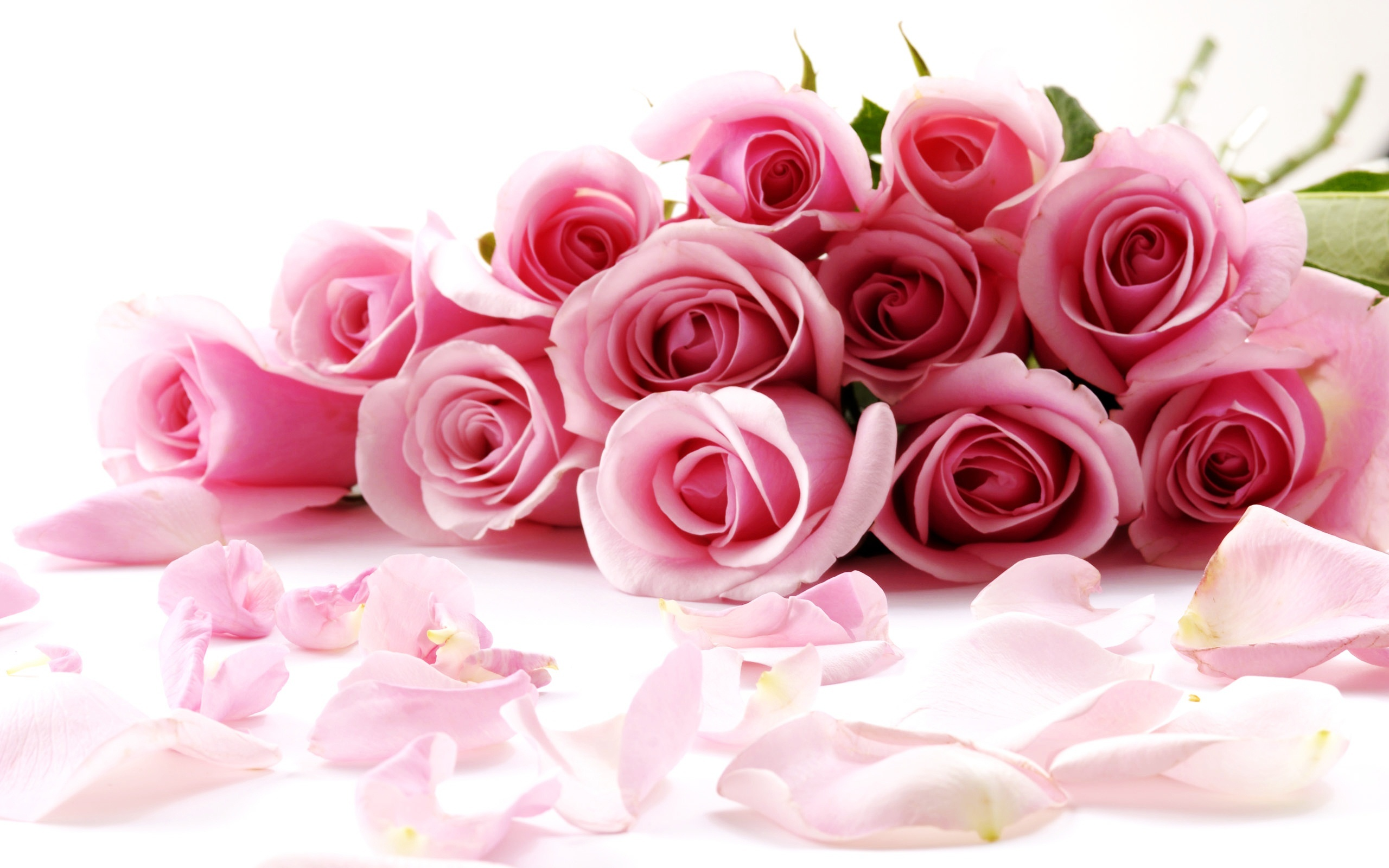 Dark Pink Roses Wallpapers