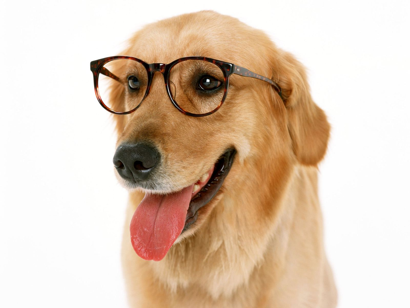 dog_with_reading_glasses-normal.jpg