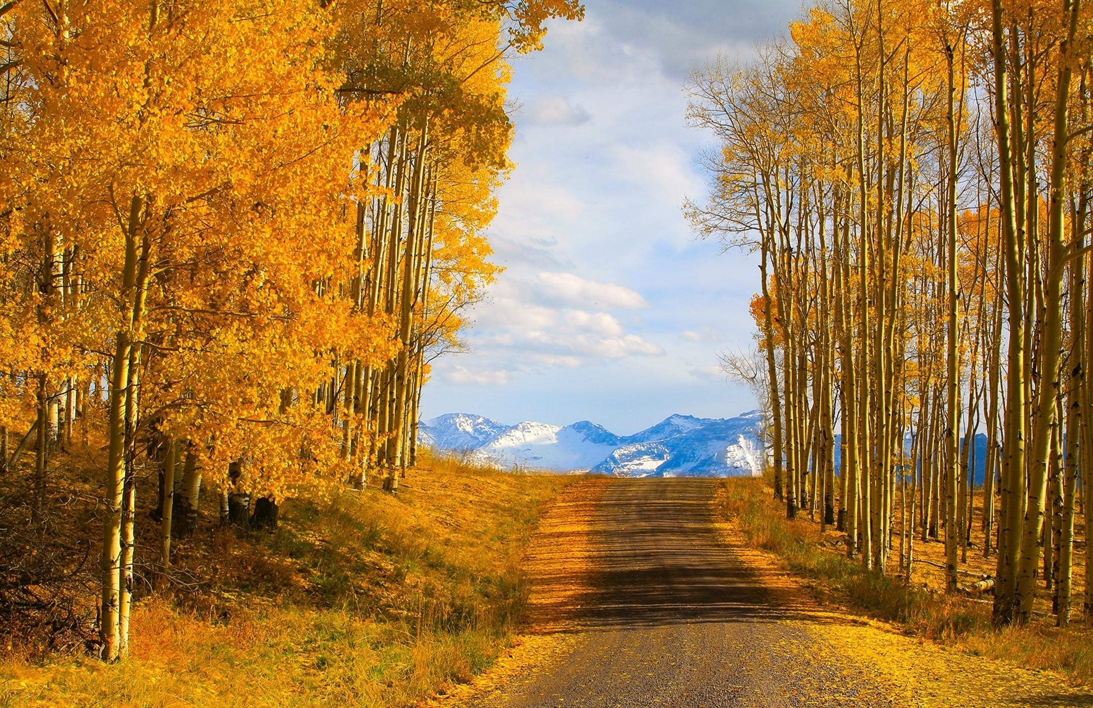 Empty Autumn Road Wallpapers