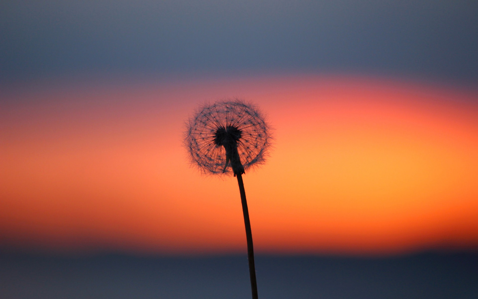 Glow Dandelion Flower And Clouds