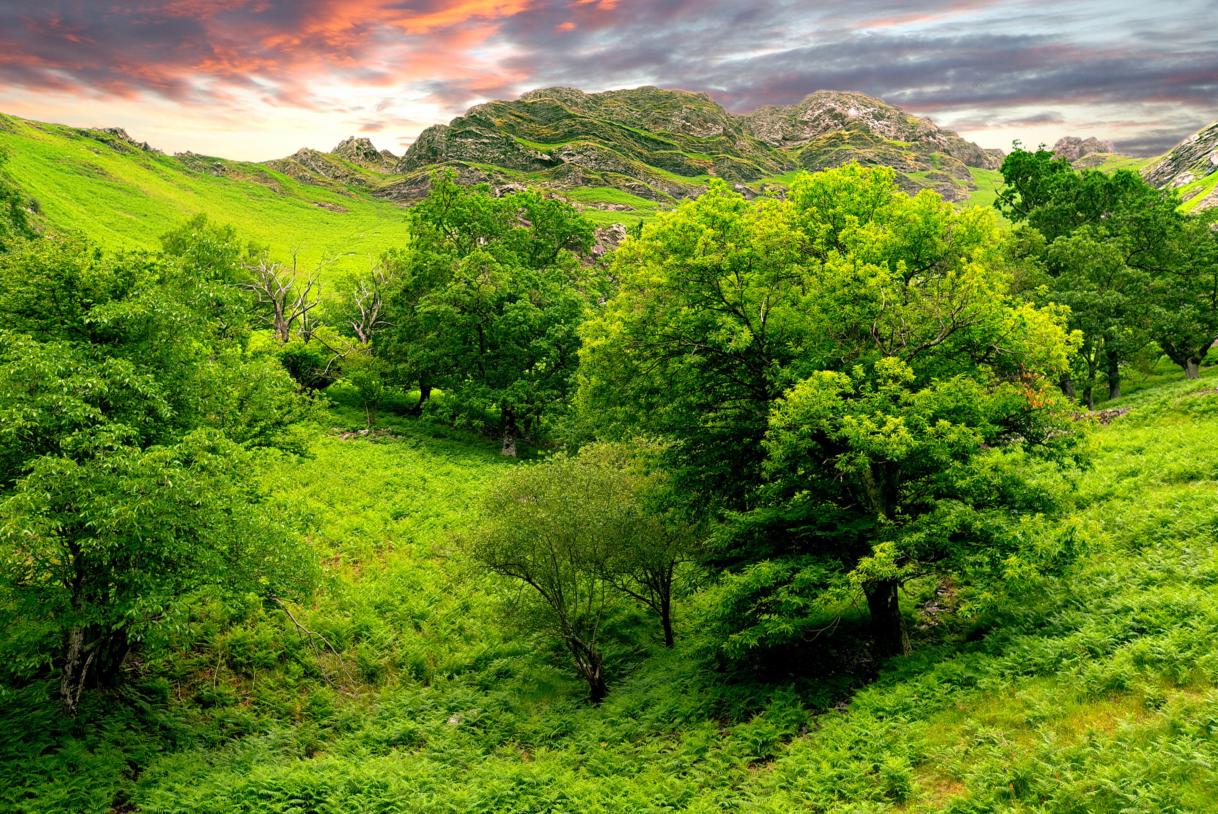Green landscape wallpapers 4272x2856 15145649 for Nature wallpaper for walls