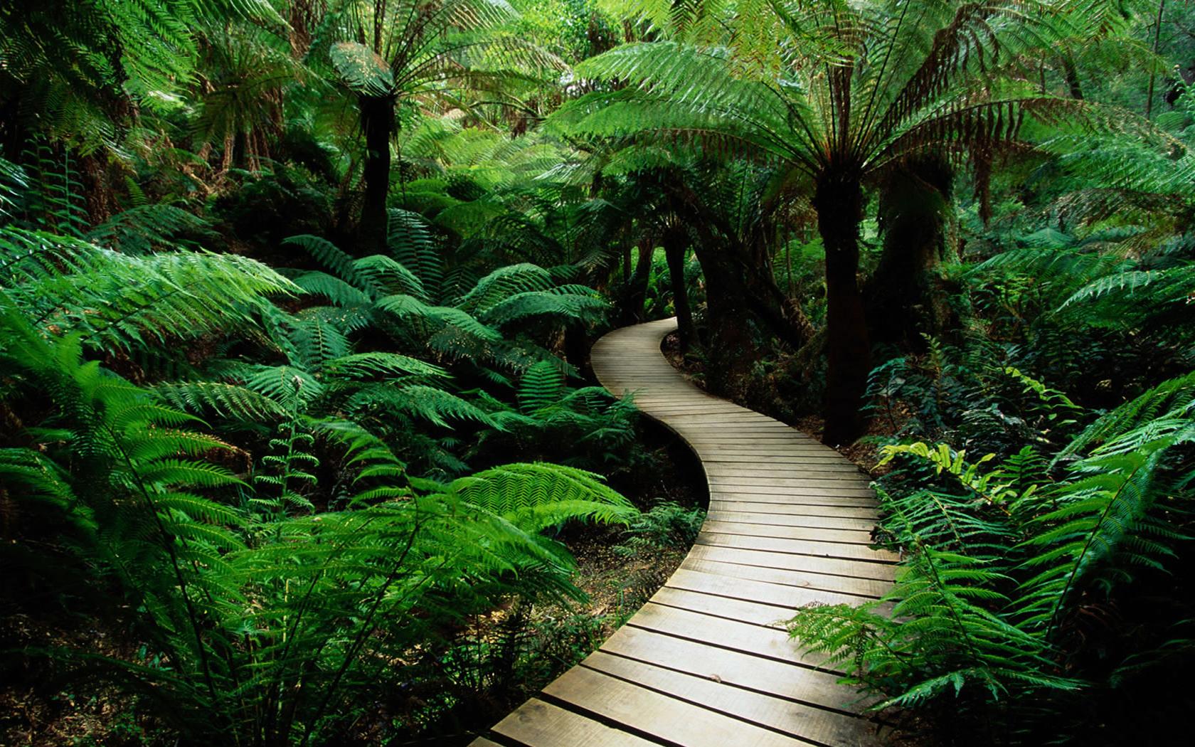 Green nature 1680 x 1050 download close