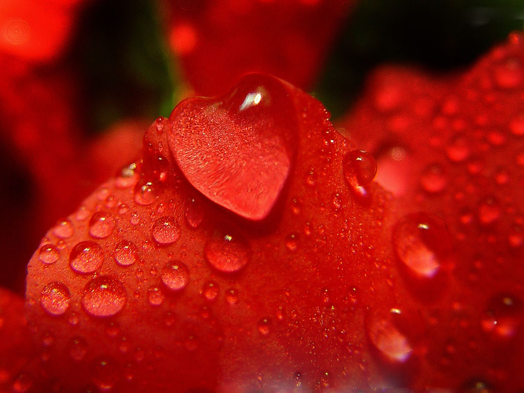 Heart Shaped Water Drop Click To View