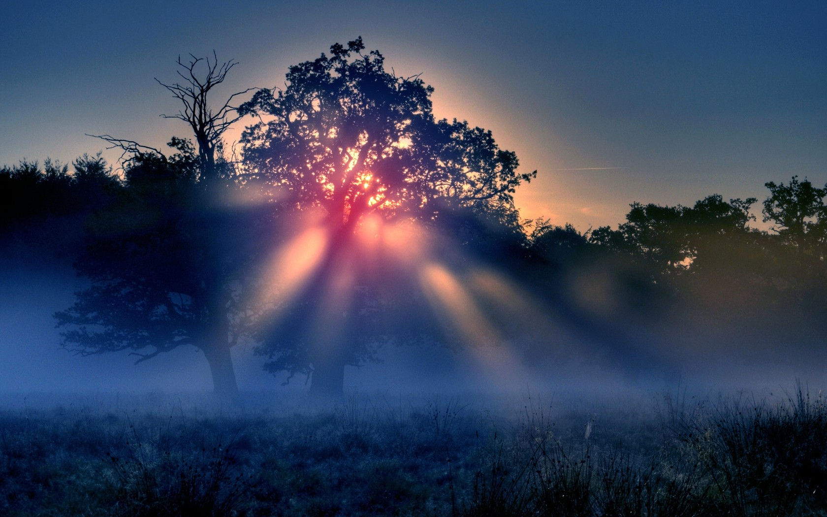 morning sun rays with fog wallpapers