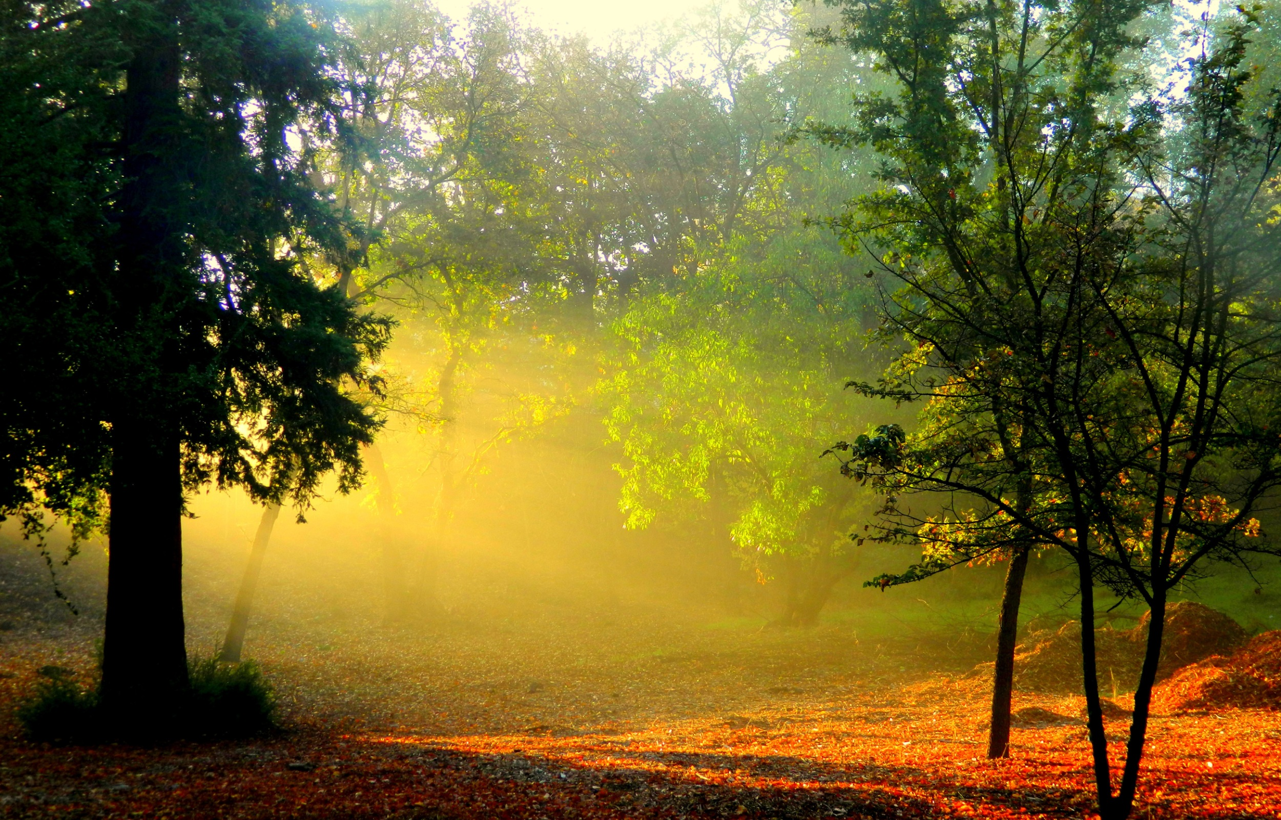 Morning sunlight and smoke in forest 2500 x 1600 download close