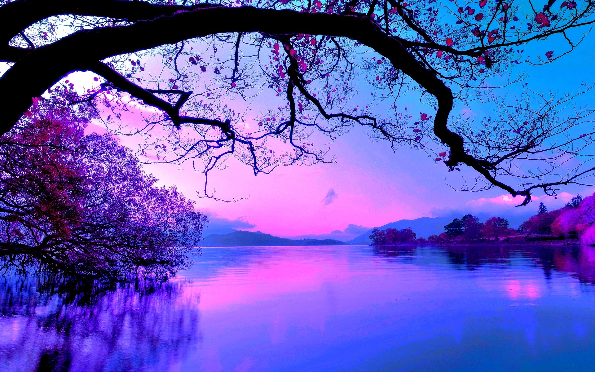 Purple Sunset On The Lake