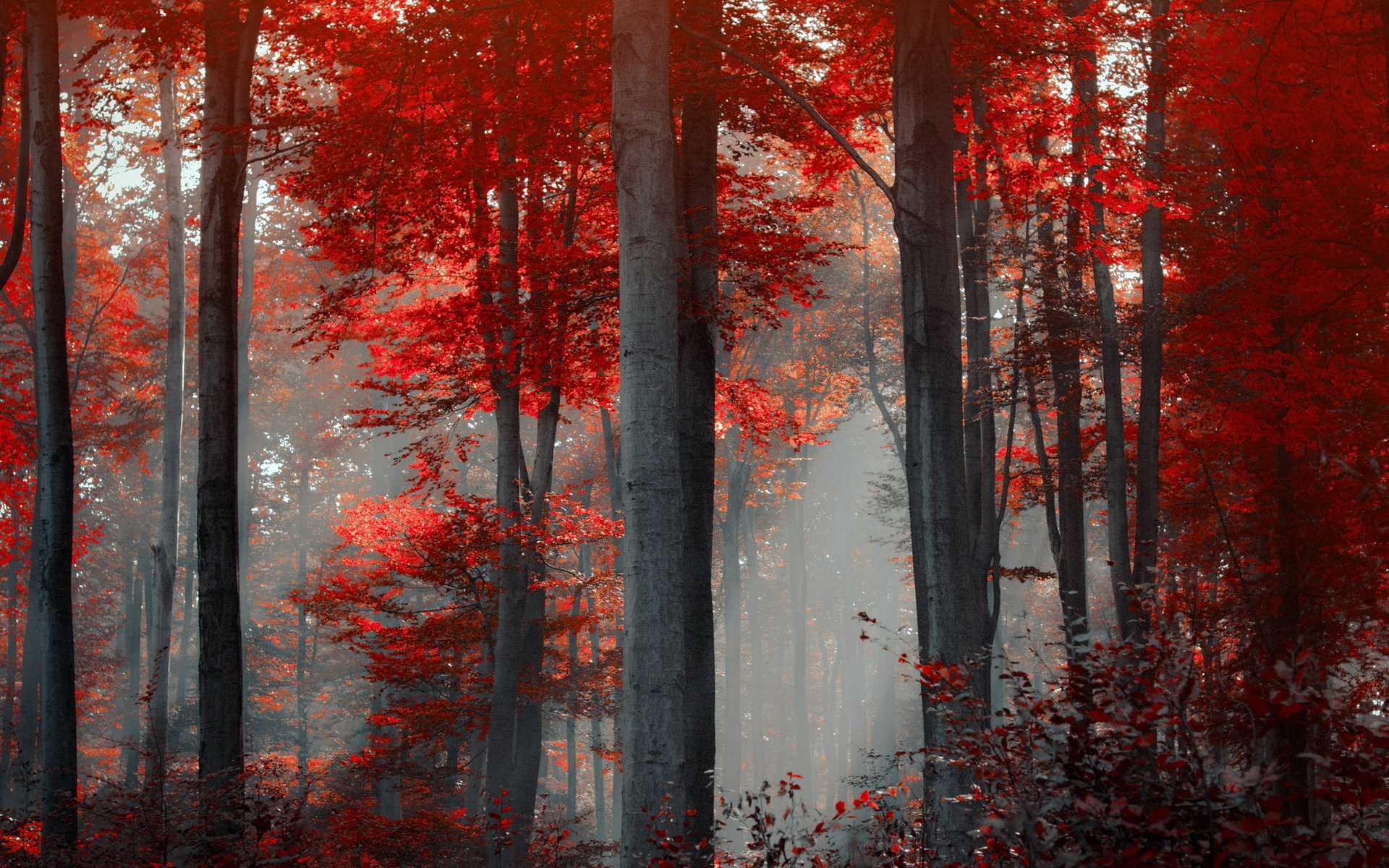 Red Forest Landscape Wallpapers - 1920x1200 - 1155691