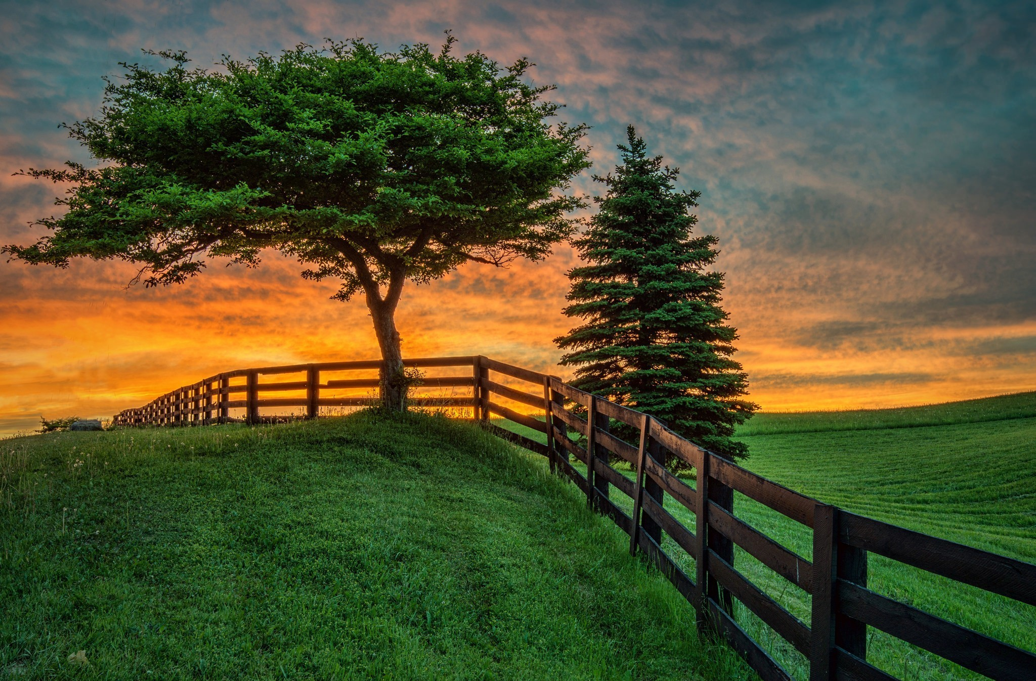 Trees And Fence At Sunset
