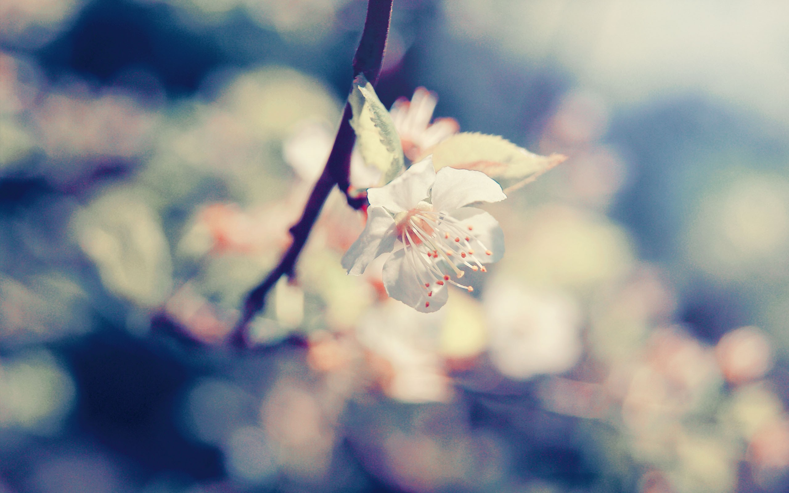 White Blossom Flower